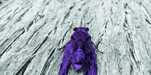 AğustosBöceği - 1